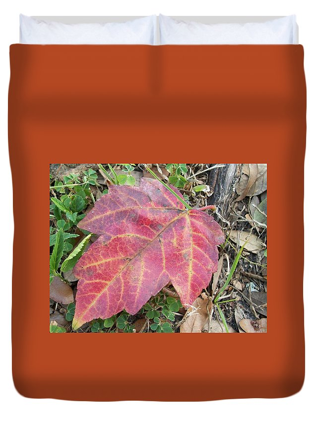 Leaf Red Yellow Fall Autumn Leaves Duvet Cover featuring the photograph Fall by Rene GrayMitchell