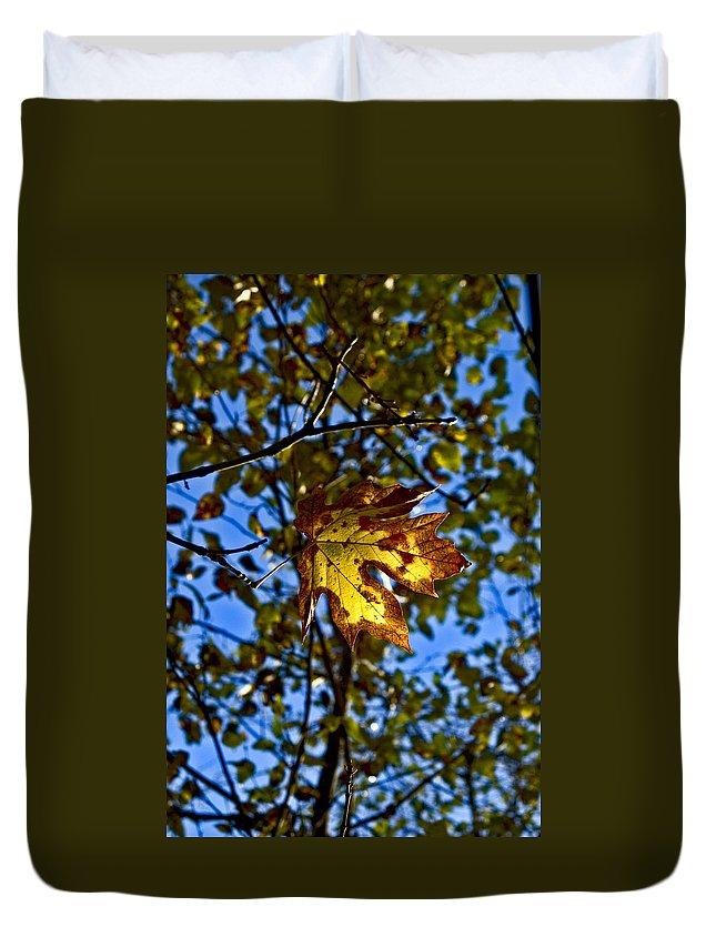 Fall Duvet Cover featuring the photograph Fall by Sara Stevenson