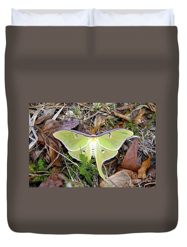Moth Duvet Cover featuring the photograph Fallen Angel by David Lee Thompson