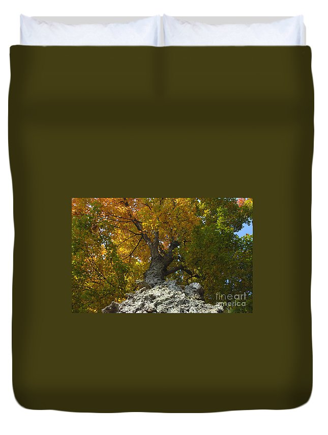 Fall Duvet Cover featuring the photograph Falling Tree by David Lee Thompson