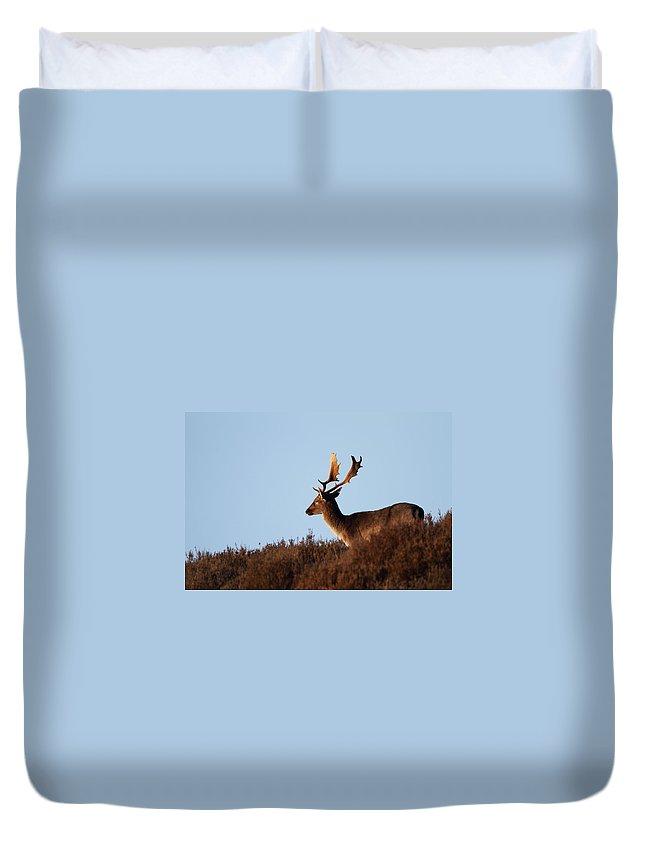Deer Duvet Cover featuring the photograph Fallow Buck by Bob Kemp