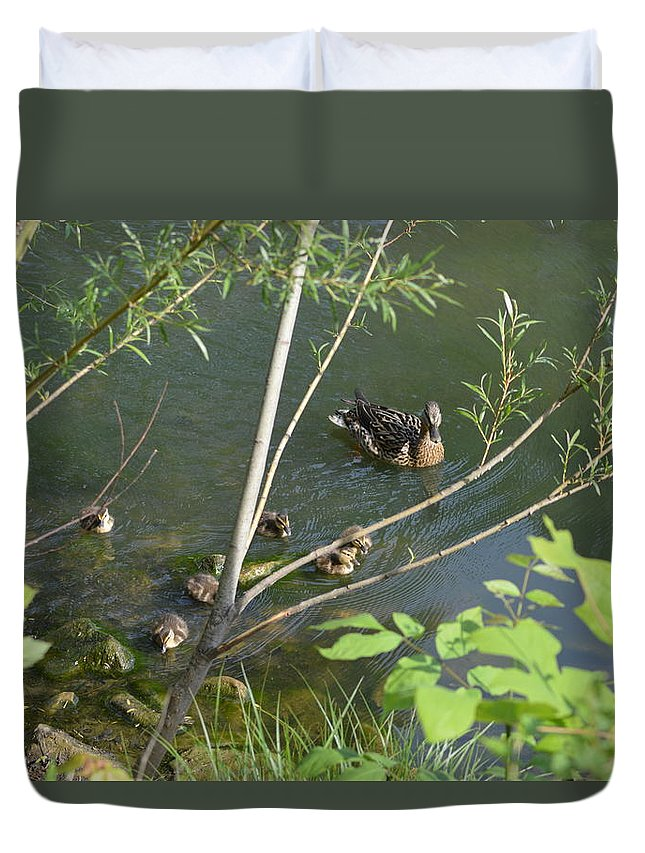 Duck Duvet Cover featuring the photograph Family Outing by Belinda Stucki