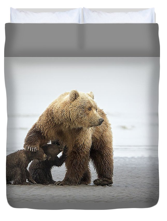 Brown Bear Duvet Cover featuring the photograph Family Time by Renee Doyle