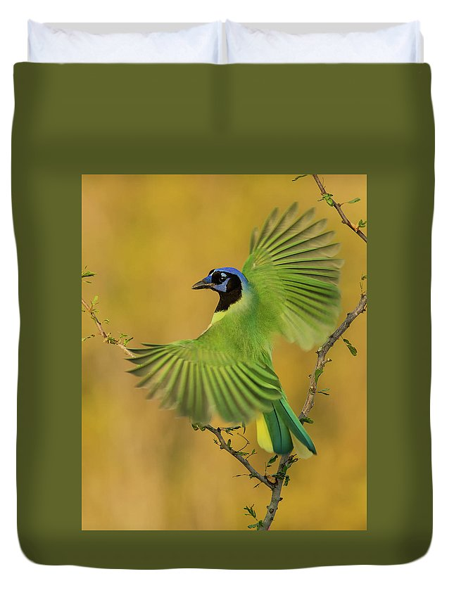 Green Jay Duvet Cover featuring the photograph Fan Dancer by Christopher Ciccone