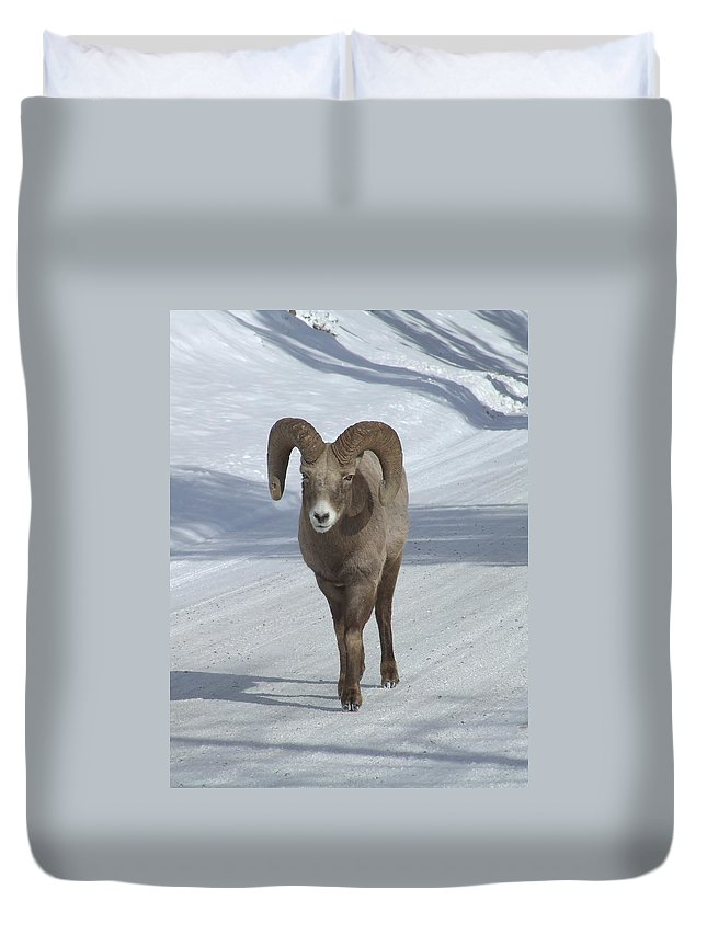 Bighorn Sheep Duvet Cover featuring the photograph Farewell To The King by Tiffany Vest