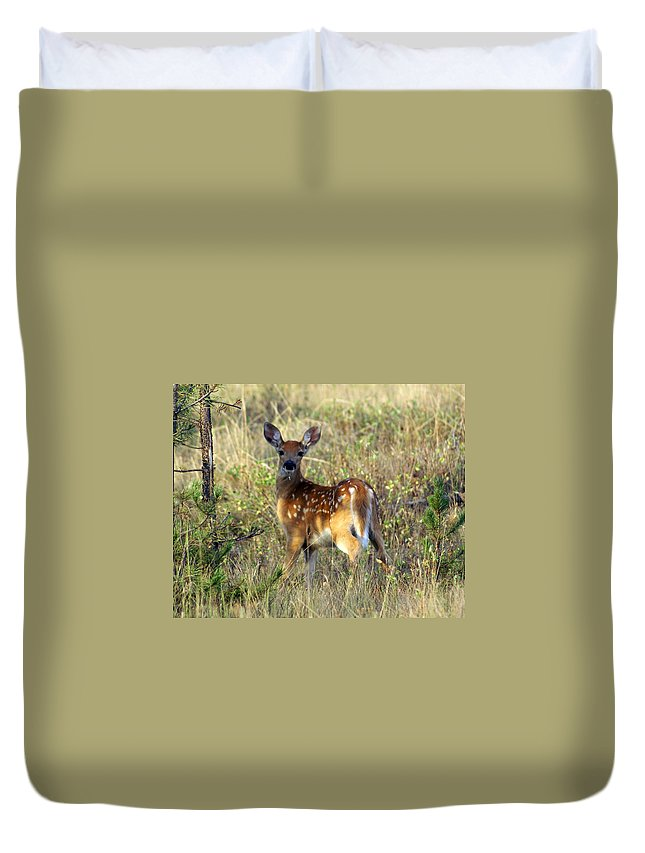 Deer Duvet Cover featuring the photograph Fawn by Marty Koch