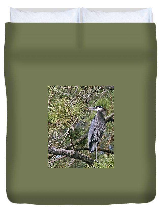 Bird Duvet Cover featuring the photograph Feathers by Phill Doherty