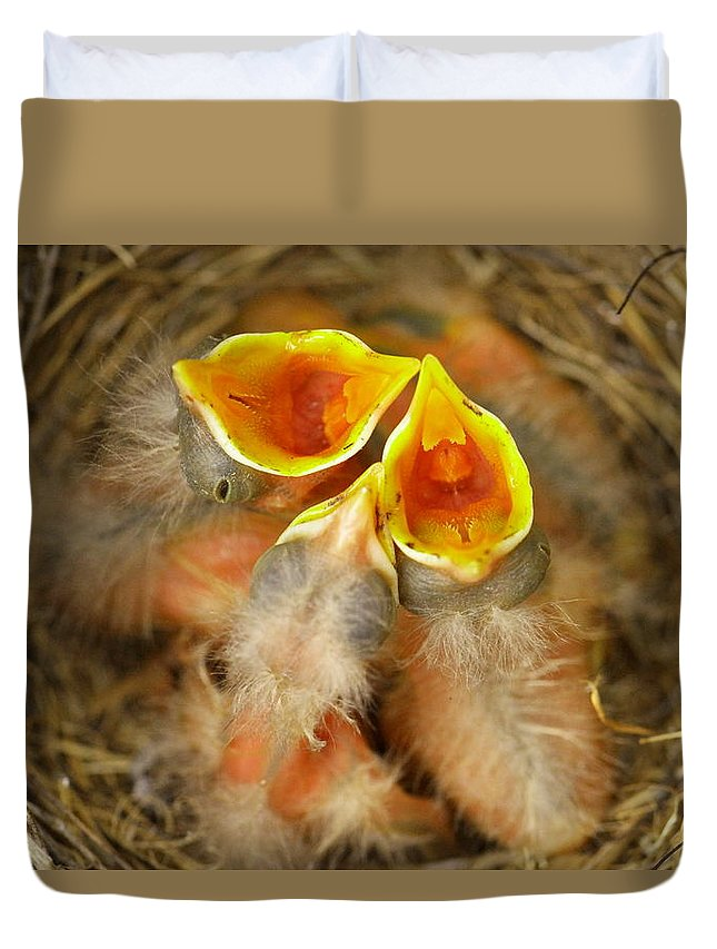 Robins Duvet Cover featuring the photograph Feeding Time by Jeff Swan