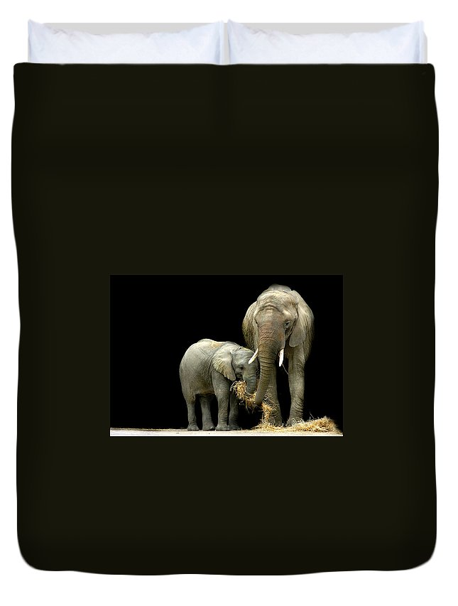 Elephant Duvet Cover featuring the photograph Feeding Time by Stephie Butler