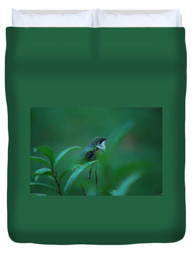 Hummingbird Duvet Cover featuring the photograph Feeling Green by Lori Tambakis