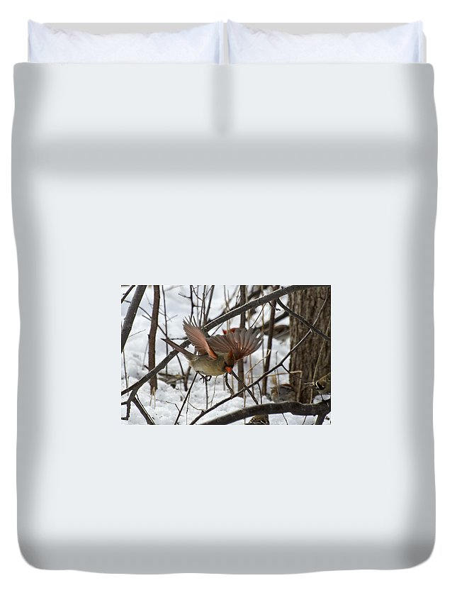 Cardinal Duvet Cover featuring the photograph Female Cardinal by David Hook