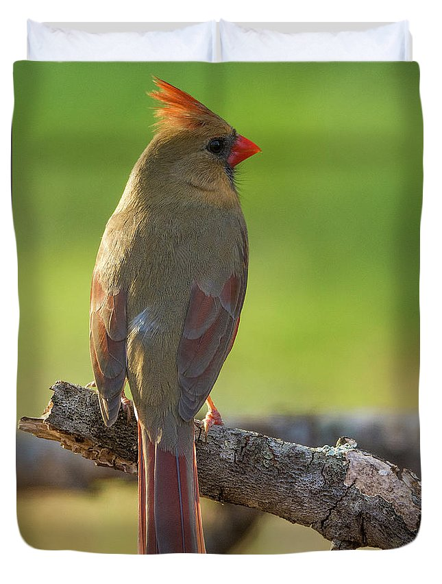 Birds Duvet Cover featuring the photograph Female Cardinal by David Waldrop