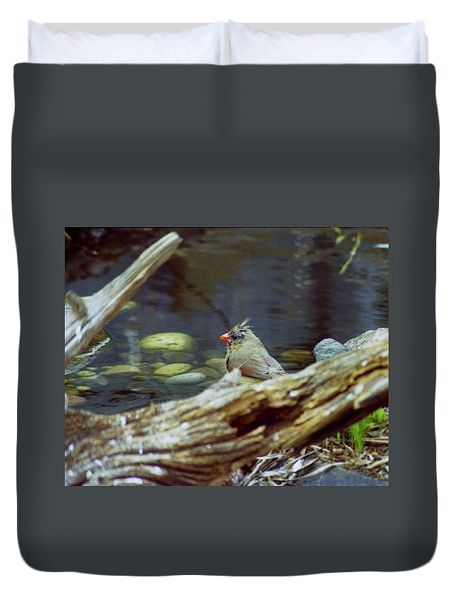 Female Duvet Cover featuring the photograph Female Cardinal by Michael Peychich