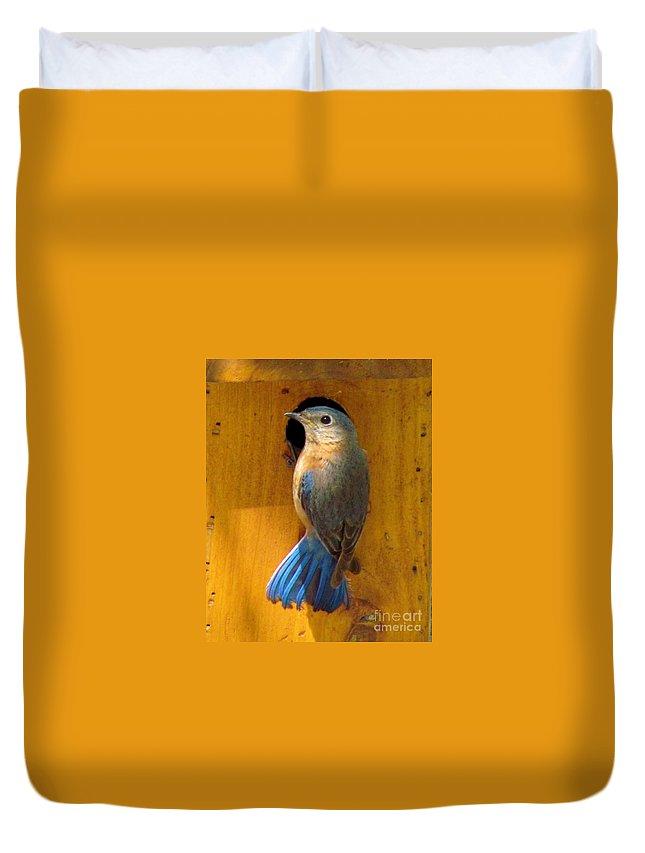 Eastern Bluebird Duvet Cover featuring the photograph Female Eastern Bluebird 7 by James Seitzinger