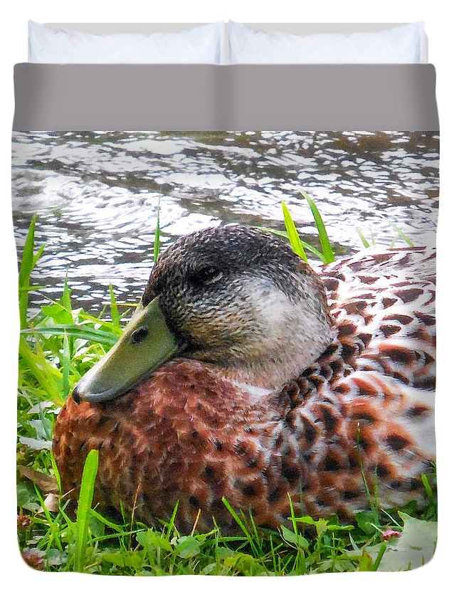 Beak Duvet Cover featuring the painting Female Mallard Duck Resting 4 by Jeelan Clark