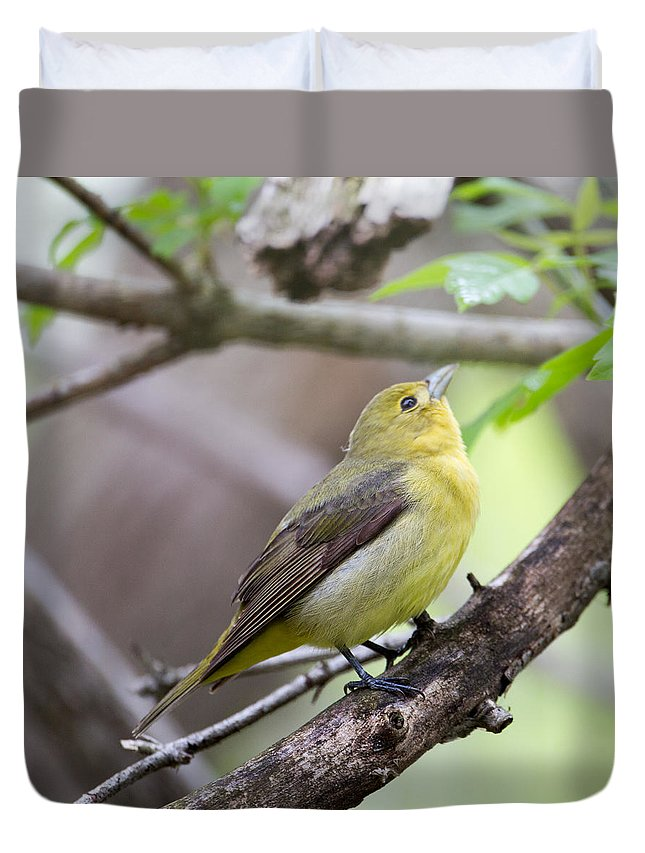 Female Scarlet Tanager Duvet Cover featuring the photograph Female Scarlet Tanager by Dave Whited