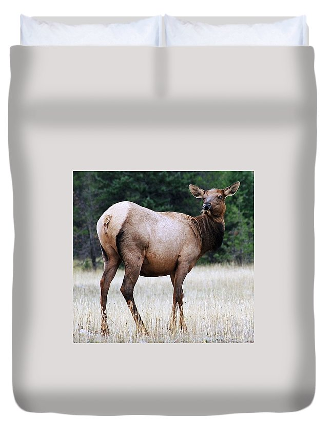 Elk Duvet Cover featuring the photograph Feme Elk by Tiffany Vest