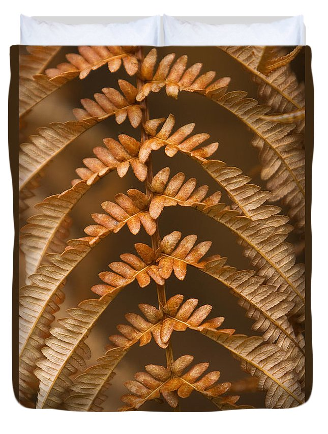 Abstract Duvet Cover featuring the photograph Fern Abstract by Ron Dahlquist - Printscapes