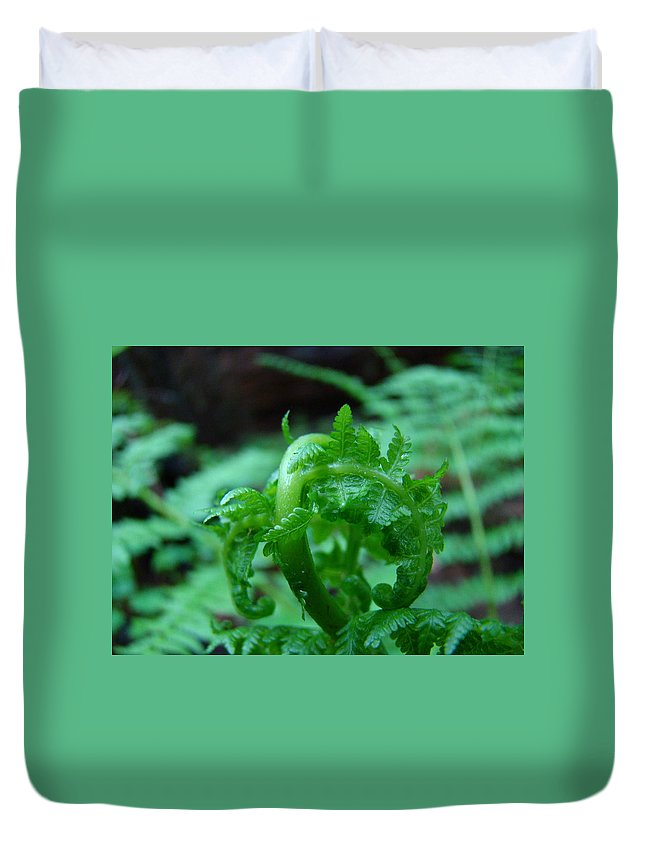 Fern Duvet Cover featuring the photograph Fern Art Prints Green Forest Ferns Giclee Baslee Troutman by Baslee Troutman