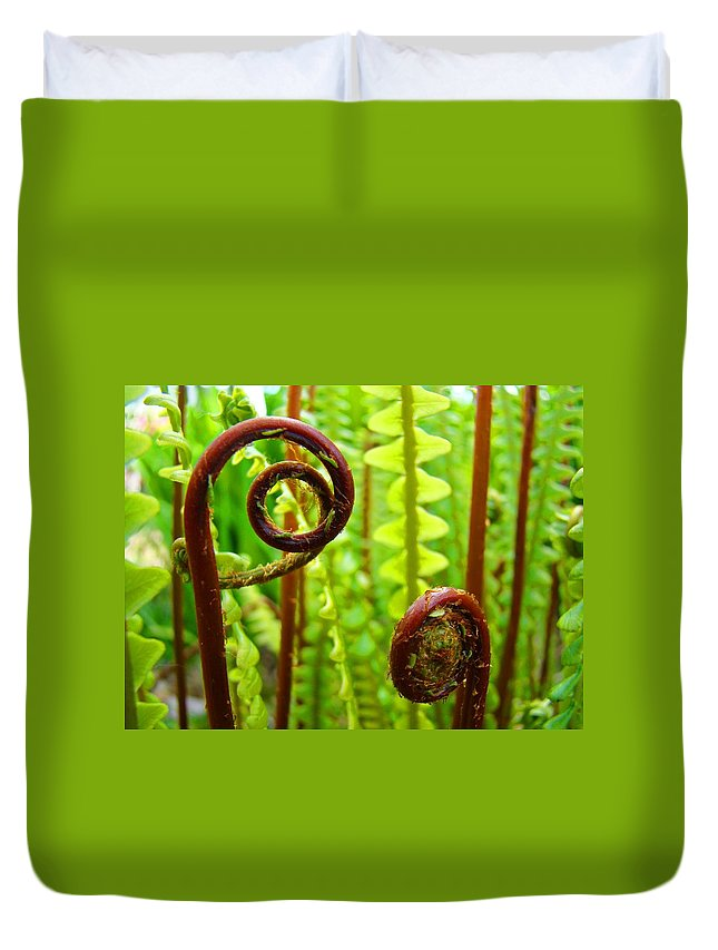 Fern Duvet Cover featuring the photograph Fern Fronds Fine Art Photography Forest Ferns Green Baslee Troutman by Baslee Troutman