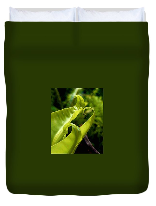 Fern Leaves Duvet Cover featuring the photograph Fern Leaves by Dragica Micki Fortuna