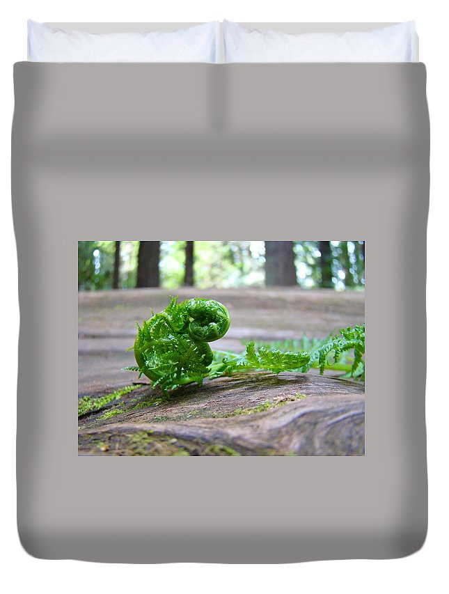 Fern Duvet Cover featuring the photograph Fern On Big Redwood Tree Art Prints Baslee Troutman by Baslee Troutman