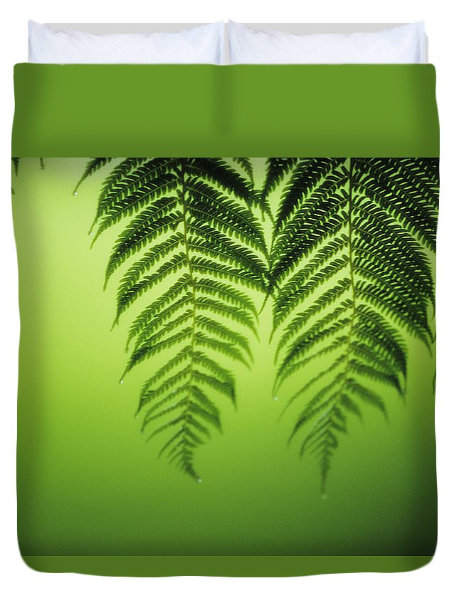 Beautiful Duvet Cover featuring the photograph Fern On Green by Ron Dahlquist - Printscapes