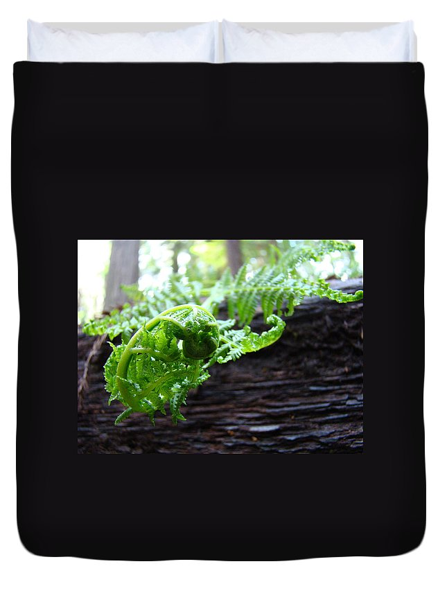 Fern Duvet Cover featuring the photograph Fern On Redwood Tree Art Print Baslee Troutman by Baslee Troutman