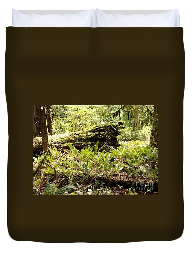 Ferns Duvet Cover featuring the photograph Fern Valley by Carol Groenen