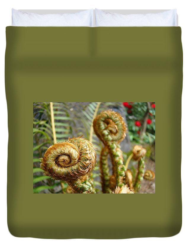 Fern Duvet Cover featuring the photograph Ferns Art Print Forest Fern Artwork Canvas Baslee Troutman by Baslee Troutman