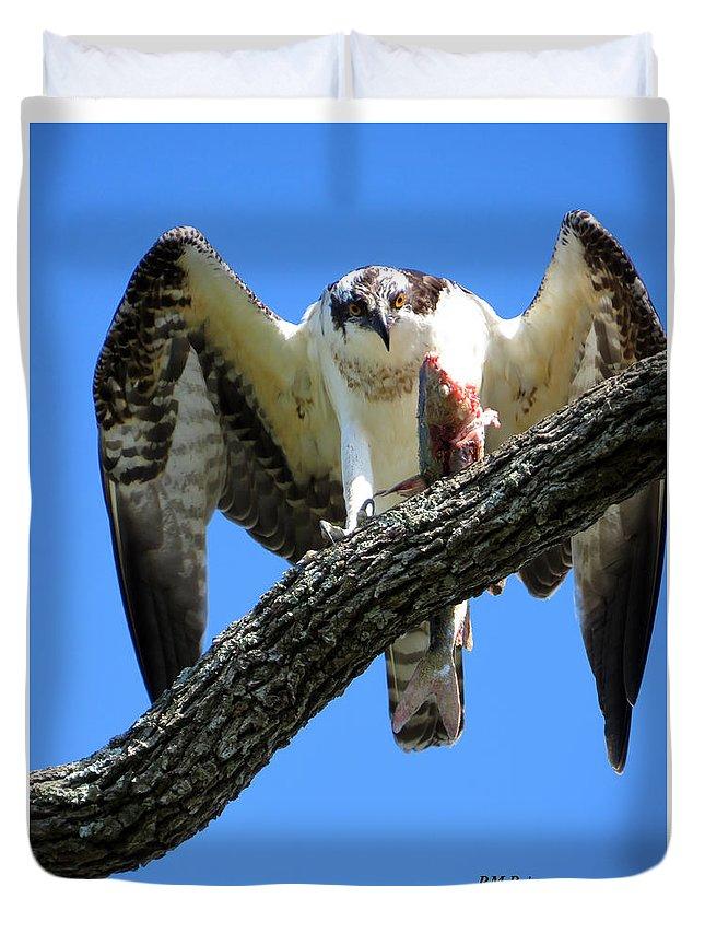 Osprey Duvet Cover featuring the photograph Ferocity by Phyllis Beiser