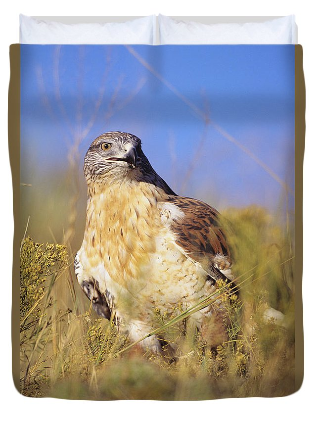 Animal Art Duvet Cover featuring the photograph Feruginous Hawk by John Hyde - Printscapes