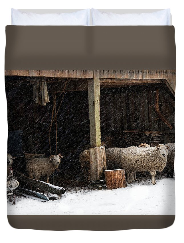 Sheep Duvet Cover featuring the photograph Fiber And Feather by Robin-Lee Vieira