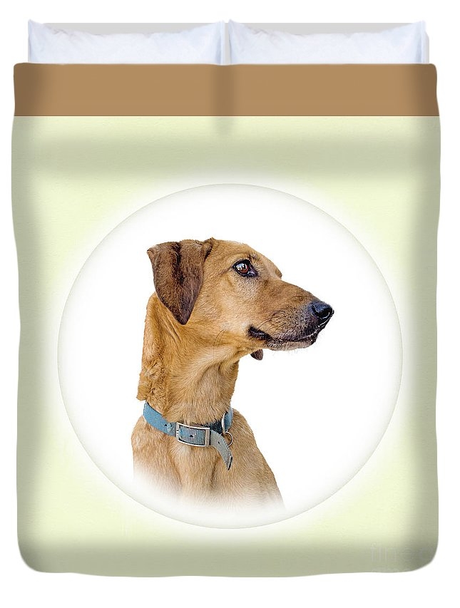 Dog Duvet Cover featuring the photograph Fido by Judith Flacke