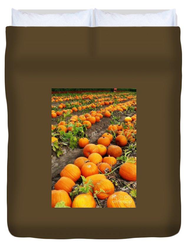 Pumpkins Duvet Cover featuring the photograph Field Of Pumpkins Card by Carol Groenen