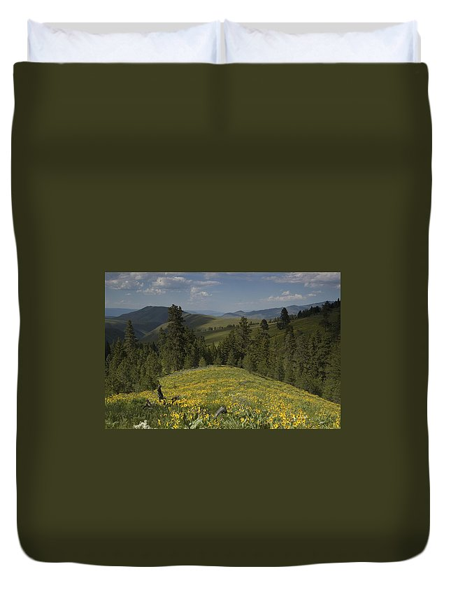 Field Duvet Cover featuring the photograph Field Of Yellow Flowers by Sara Stevenson