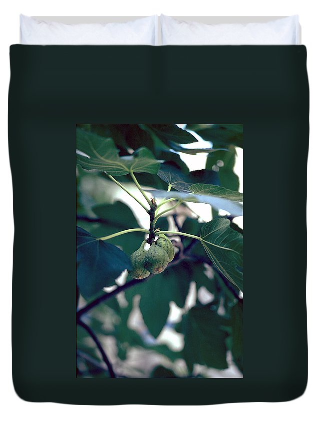 Fig Duvet Cover featuring the photograph Fig by Flavia Westerwelle
