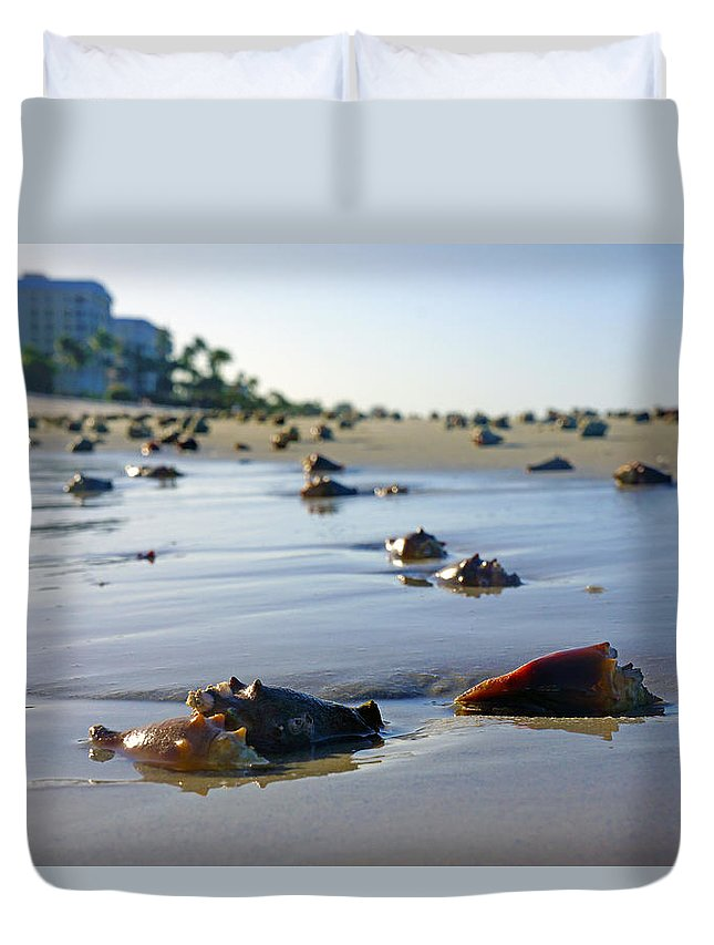 Conch Duvet Cover featuring the photograph Fighting Conchs On The Beach In Naples, Fl by Robb Stan