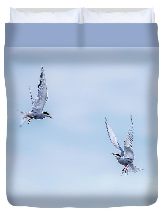 Fighting Terns Duvet Cover featuring the photograph Fighting Terns by Torbjorn Swenelius