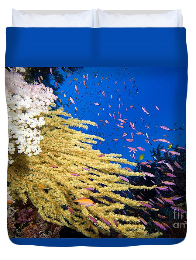 Alcyonarian Duvet Cover featuring the photograph Fijian Reef Scene by Dave Fleetham - Printscapes