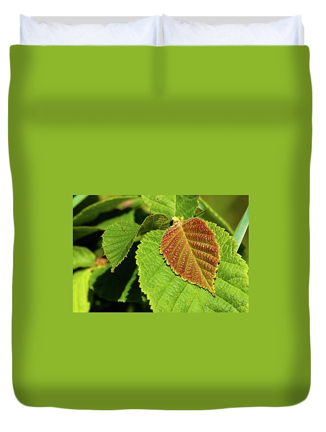 Hazelnut Duvet Cover featuring the photograph Filbert Leaf by Grant Groberg
