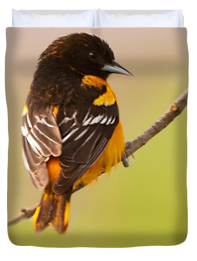 Finch Duvet Cover featuring the photograph Finch by Gaby Swanson
