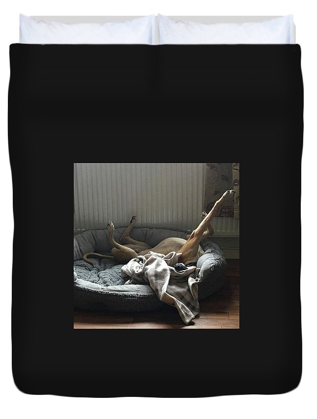 Lurcher Duvet Cover featuring the photograph Finly Seems To Be Settling Into His New by John Edwards