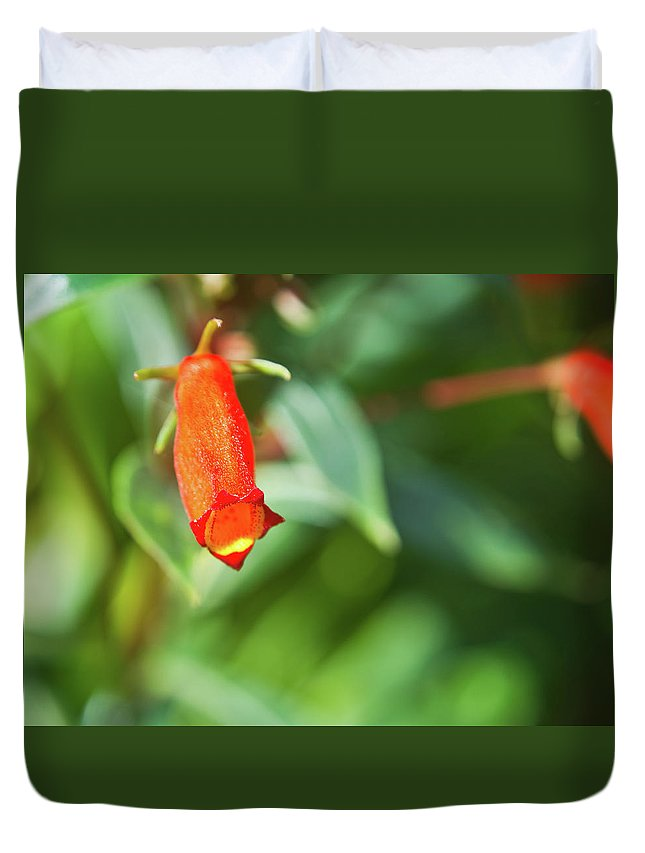 Scrophulariaceae Duvet Cover featuring the photograph Firecracker Blossom by Douglas Barnett