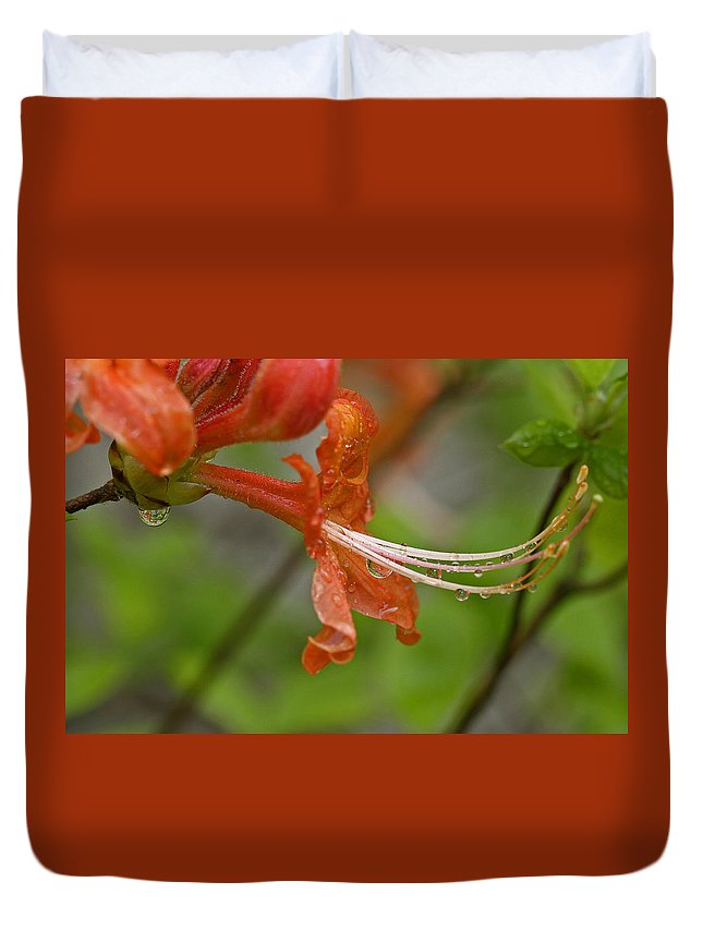 Flame Duvet Cover featuring the photograph Flame Azalea by Edward Kennair