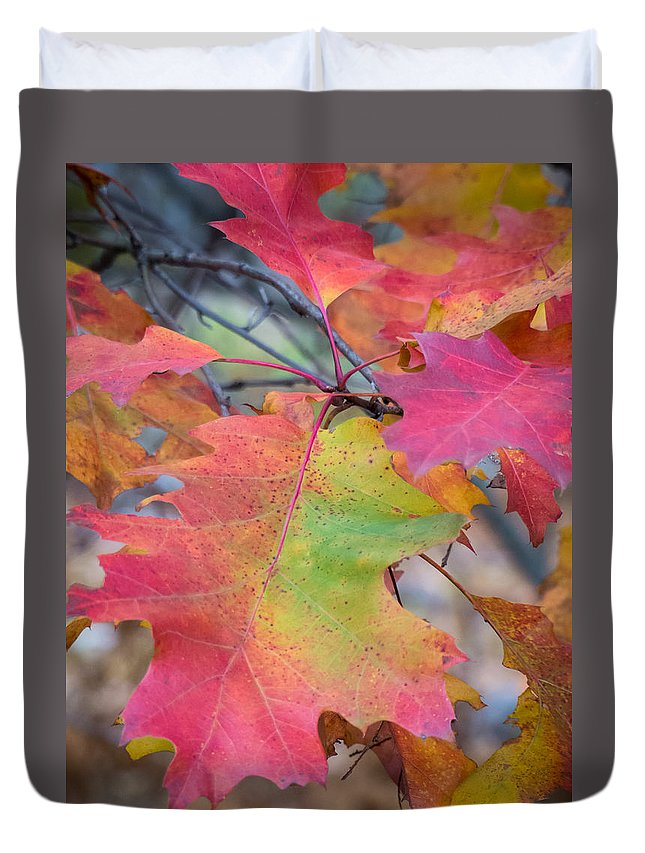 Fall Foliage Duvet Cover featuring the photograph Flaming Oak by Diane Moore