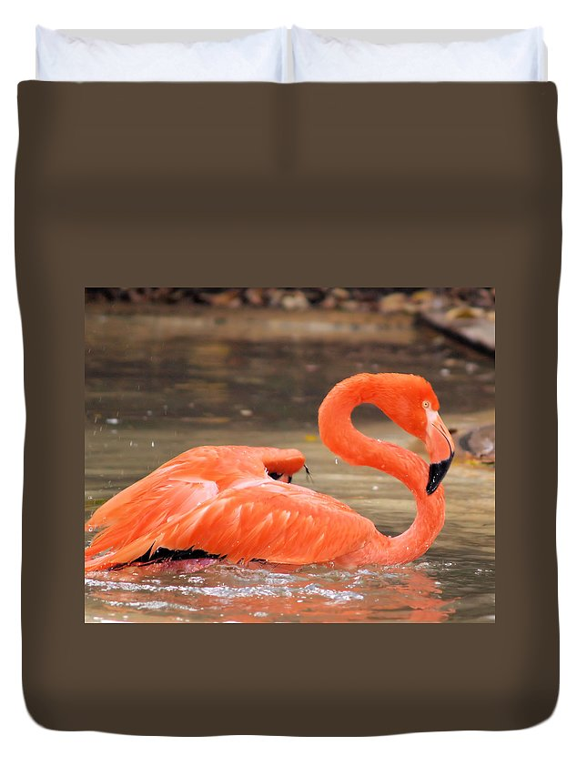 Flamingo Duvet Cover featuring the photograph Flamingo by Gaby Swanson