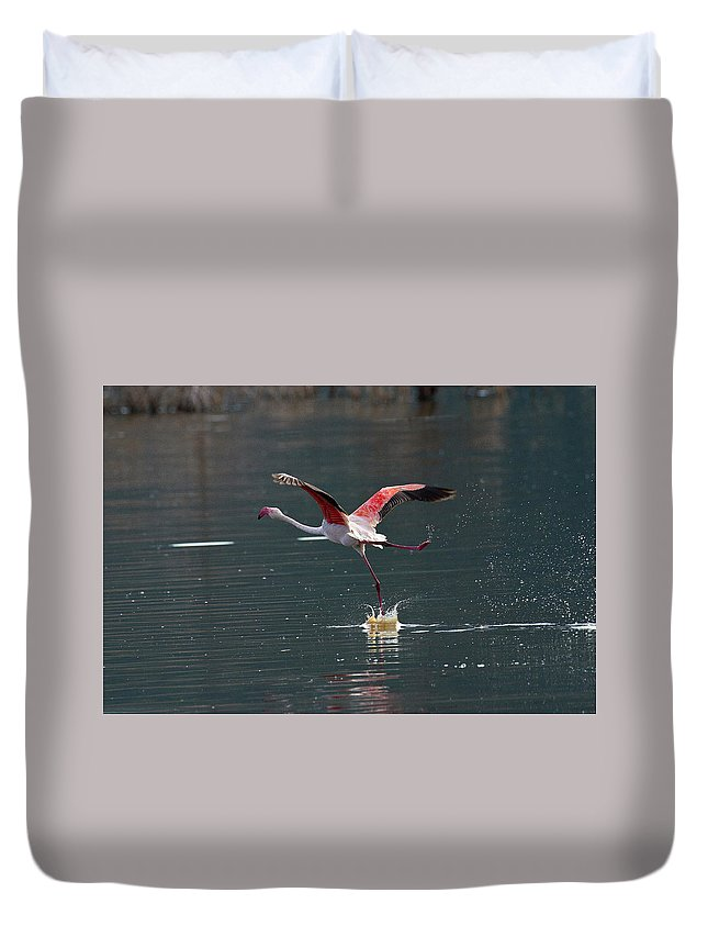 Flamingo Duvet Cover featuring the photograph Flamingo Kick Off by Janet Chung