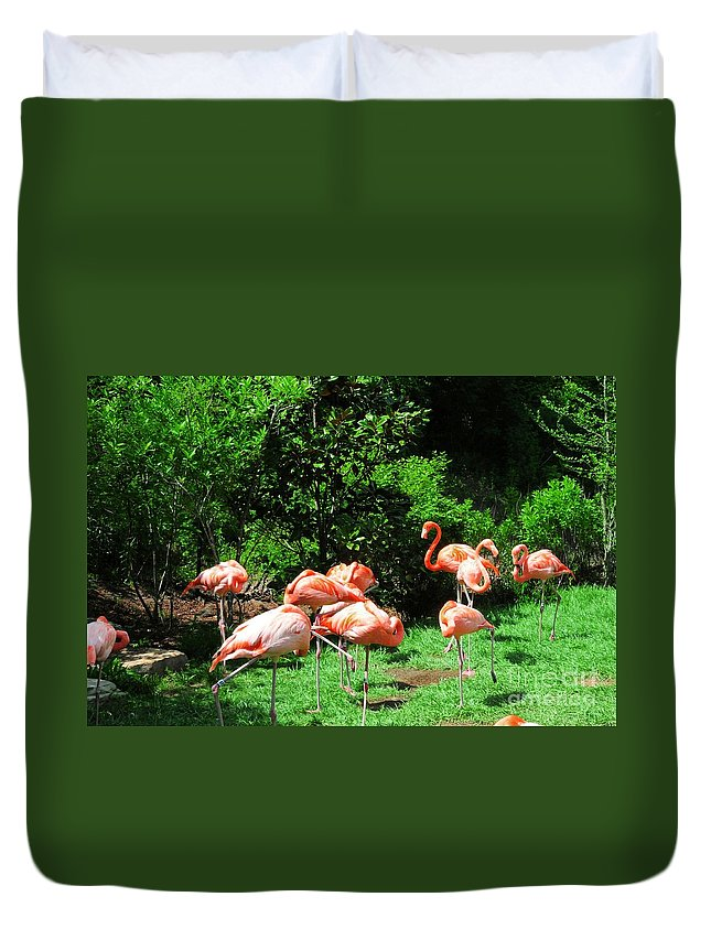 Flamingo Duvet Cover featuring the photograph Flamingo Party by Kathleen Struckle