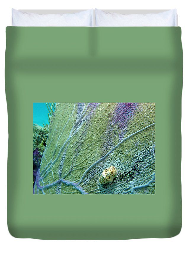 Ocean Duvet Cover featuring the photograph Flamingo Tongue by Kimberly Mohlenhoff